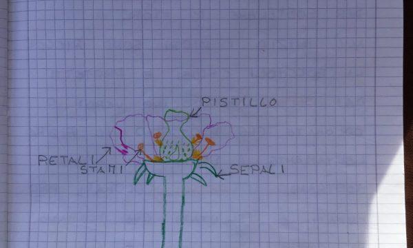 Il Fiore, l'impollinazione e le api